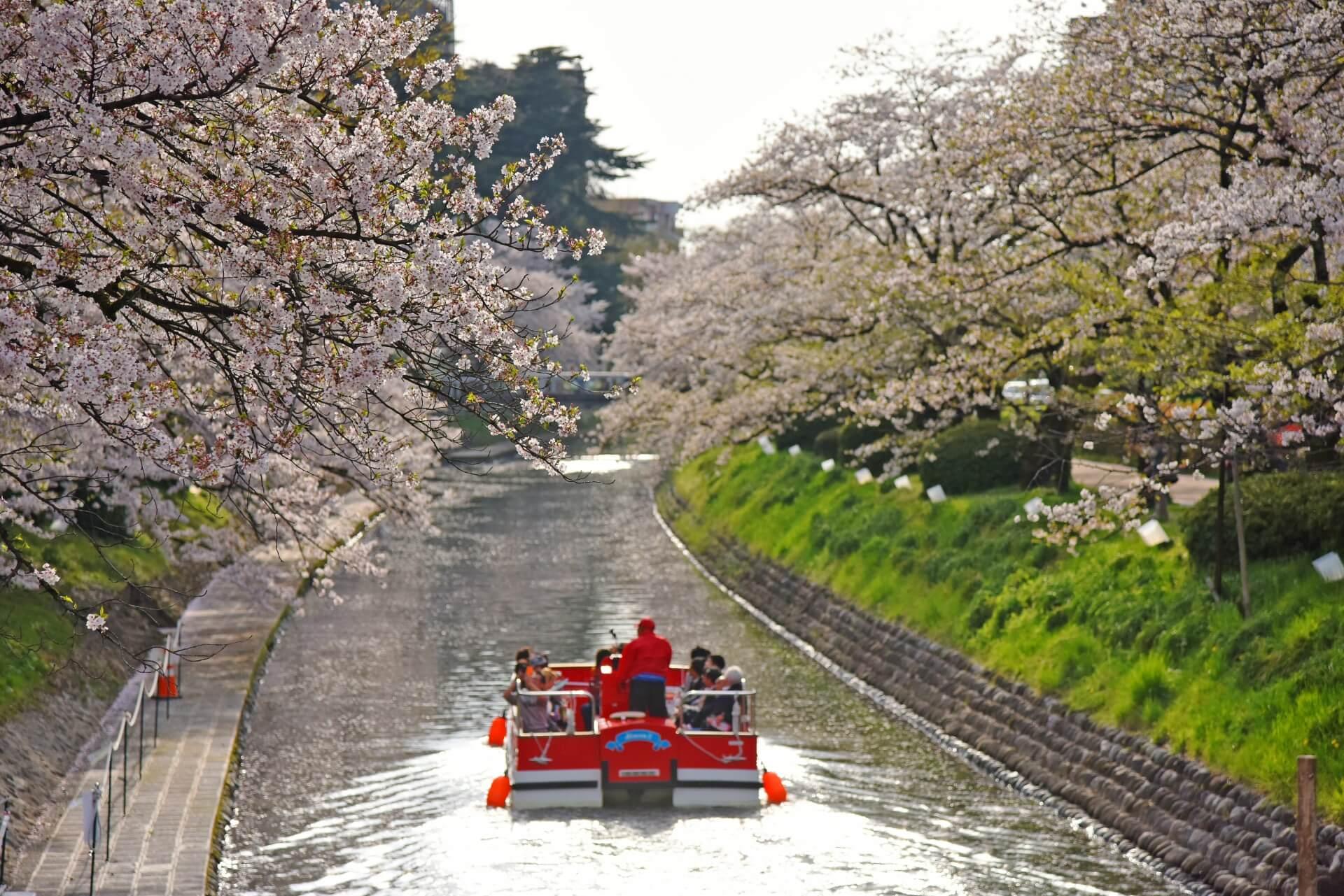 matsukawa-toyama-blossom